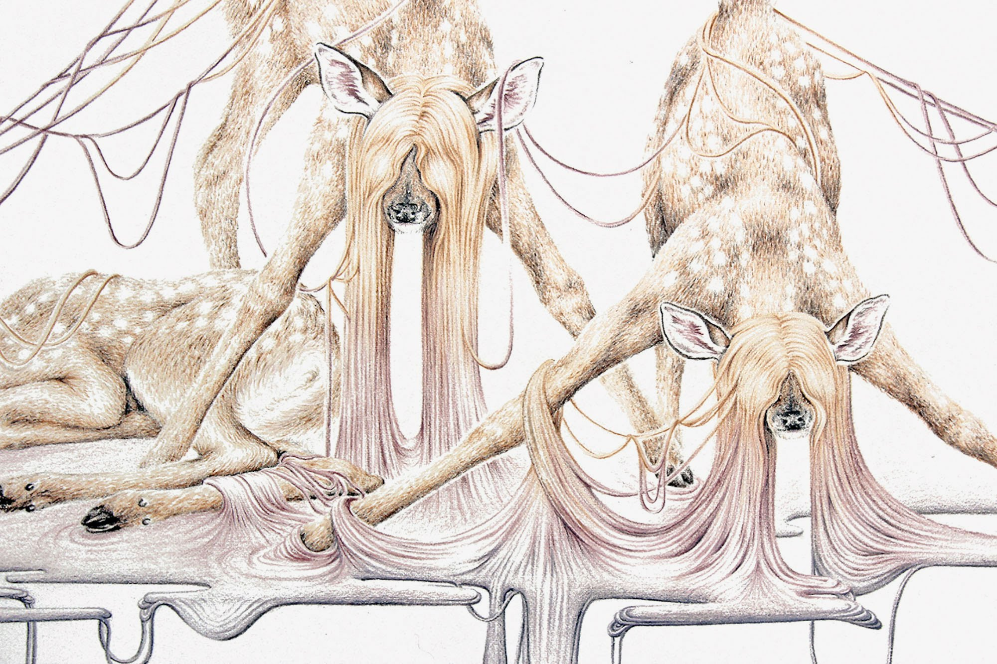 Detail drawing of fawns by Suzanne Head