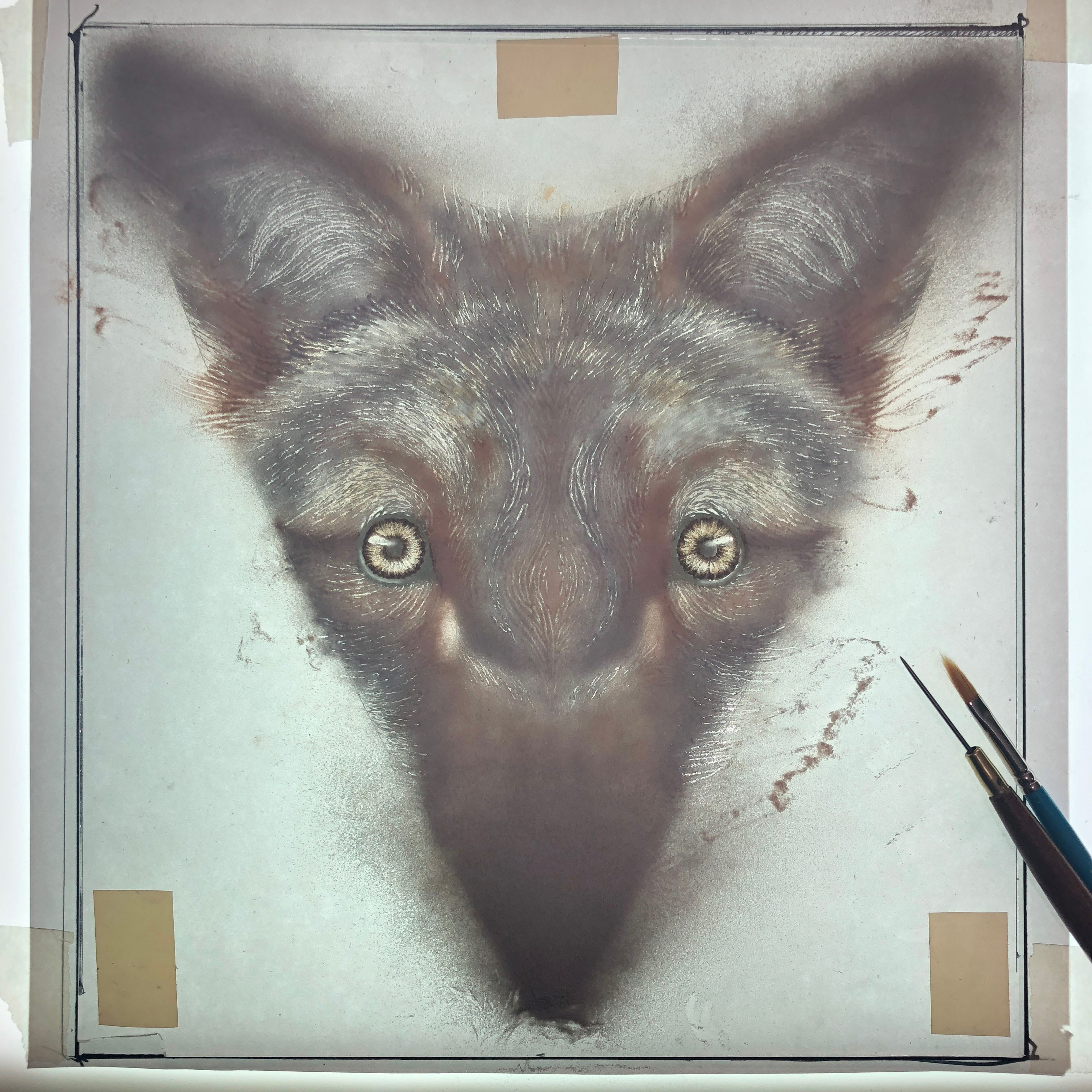 Glass powder drawing of a coyote by Suzanne Head